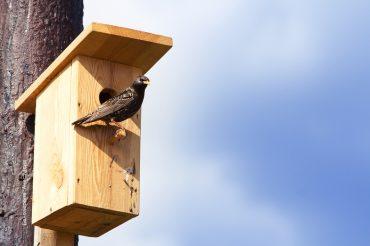 Скворечник-домик для птиц